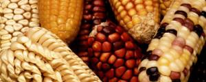 kind of corn fitnessreviews