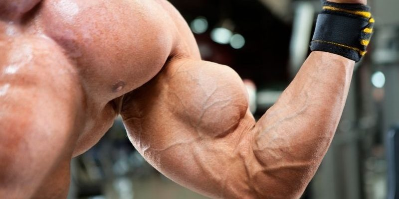 8 Brachialis Exercises to Build Monster Arms